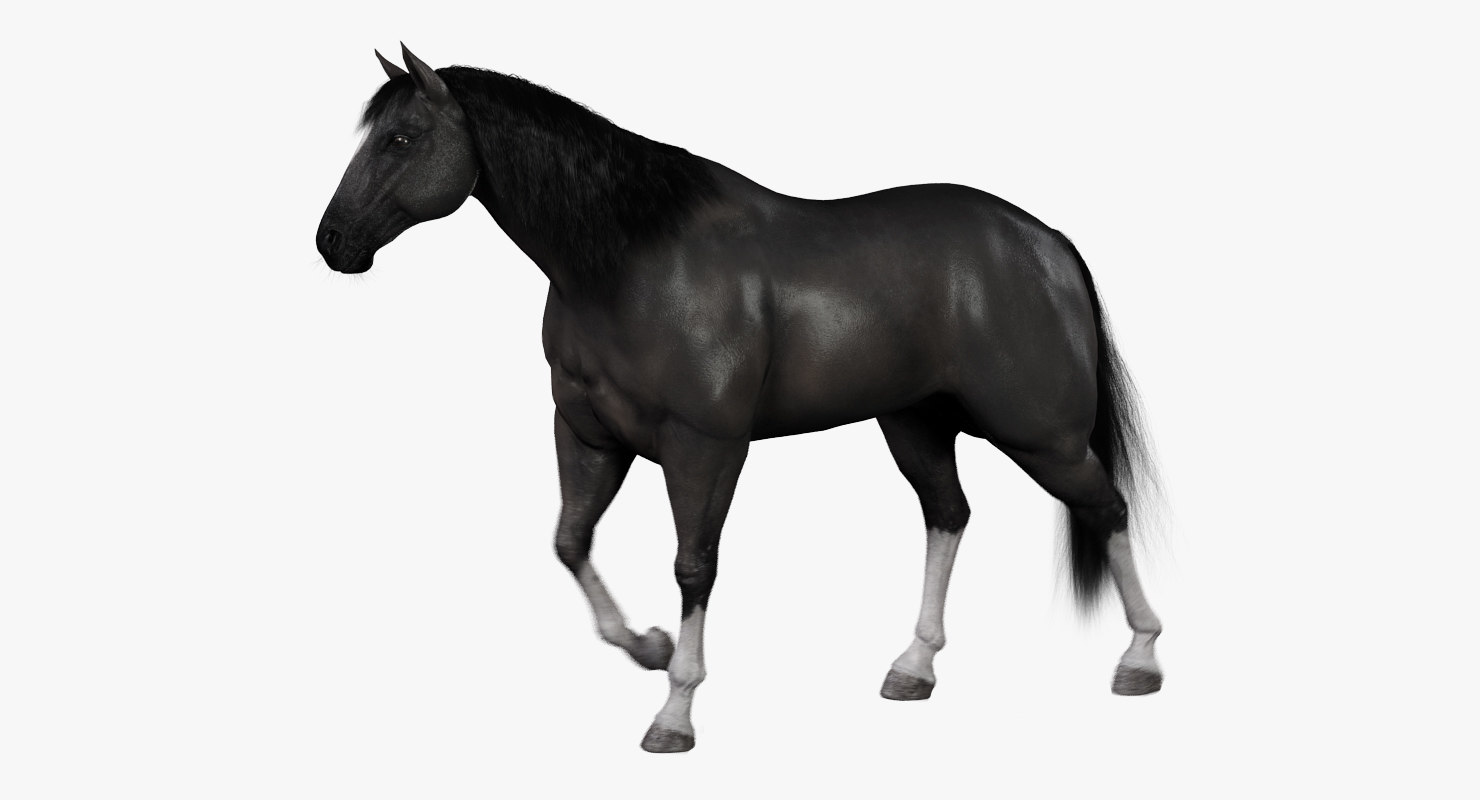 horse black fur animation ma