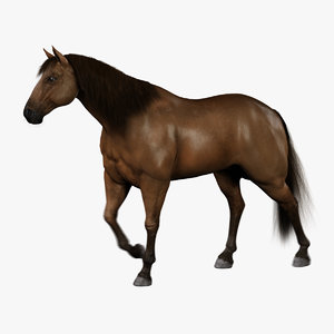 horse brown fur animation 3d model