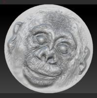 bas chimpanzees 3d model