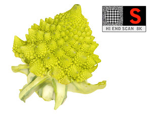 romanesco broccoli 8k max
