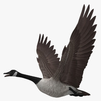 "Branta Canadensis ""Canadian Goose"