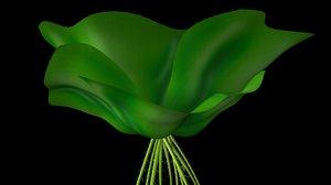 maya pistia plant stratiotes