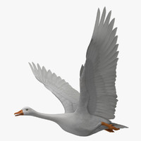 obj chen caerulescens snow goose