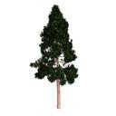 Redwood 3D models