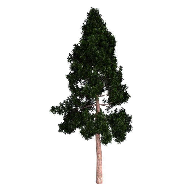 redwood giant max