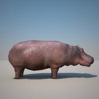 hippopotamus max