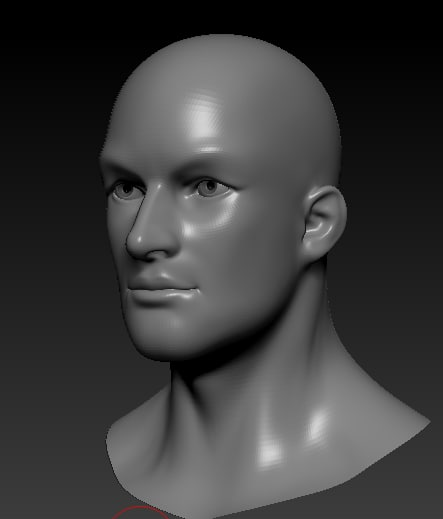 3d male head bust