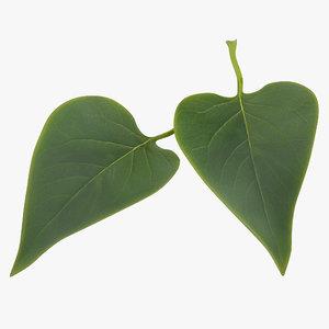 3d leaf 2 model