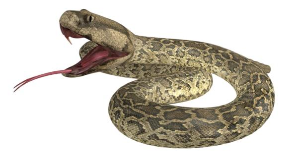 rattlesnakes snakes 3d model