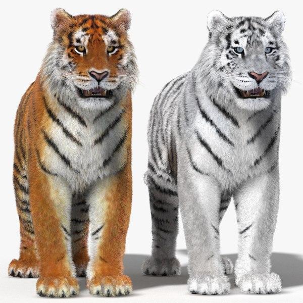 tiger fur color 3d 3ds