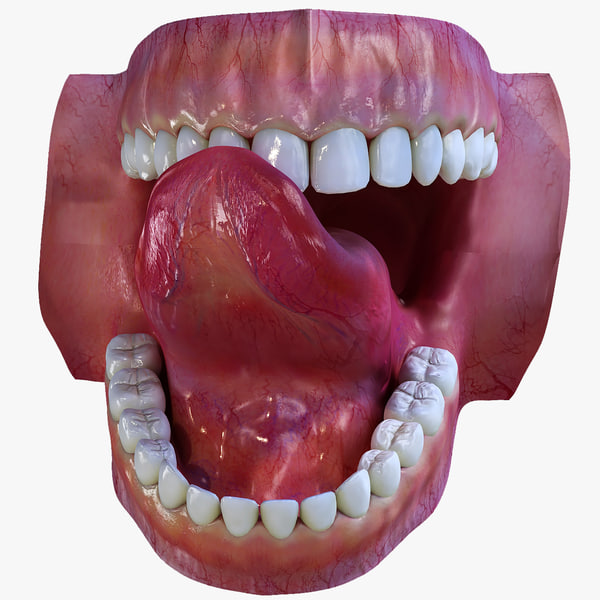 human mouth teeth 3d max