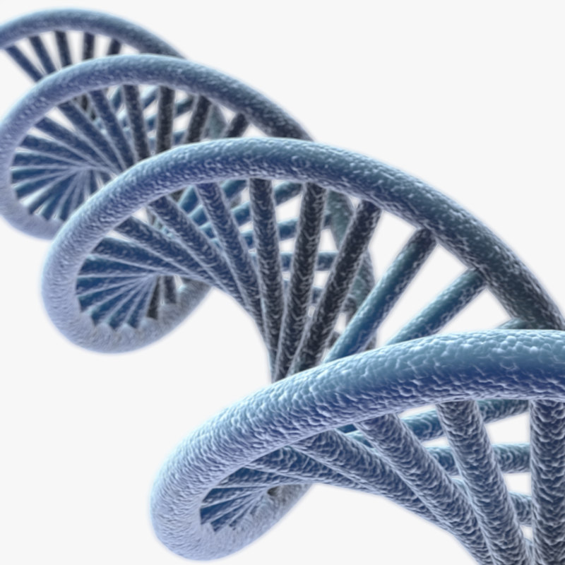 free human dna lightwave 3d model
