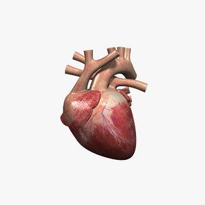 human heart rigged 3d max