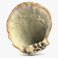 3d sea shell 5