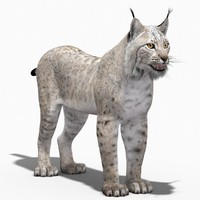 3dsmax eurasian lynx white