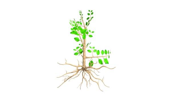 3d soil roots model