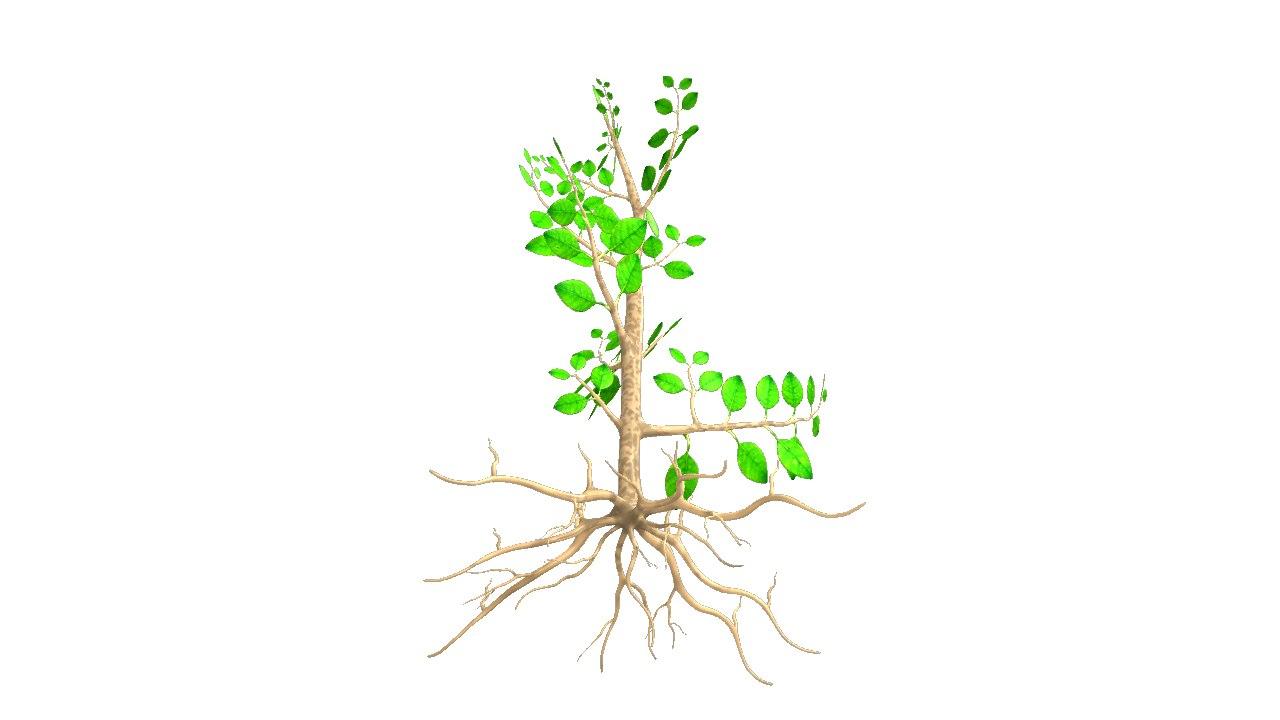 3d soil roots model for 0 4 soil carbon