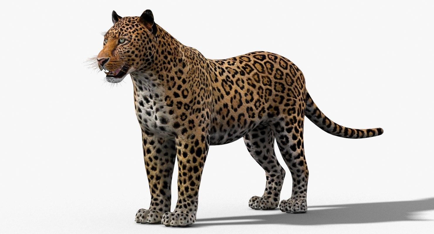 cat leopard feline 3d 3ds