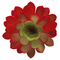 two colored flower 1