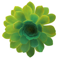 two colored flower 3