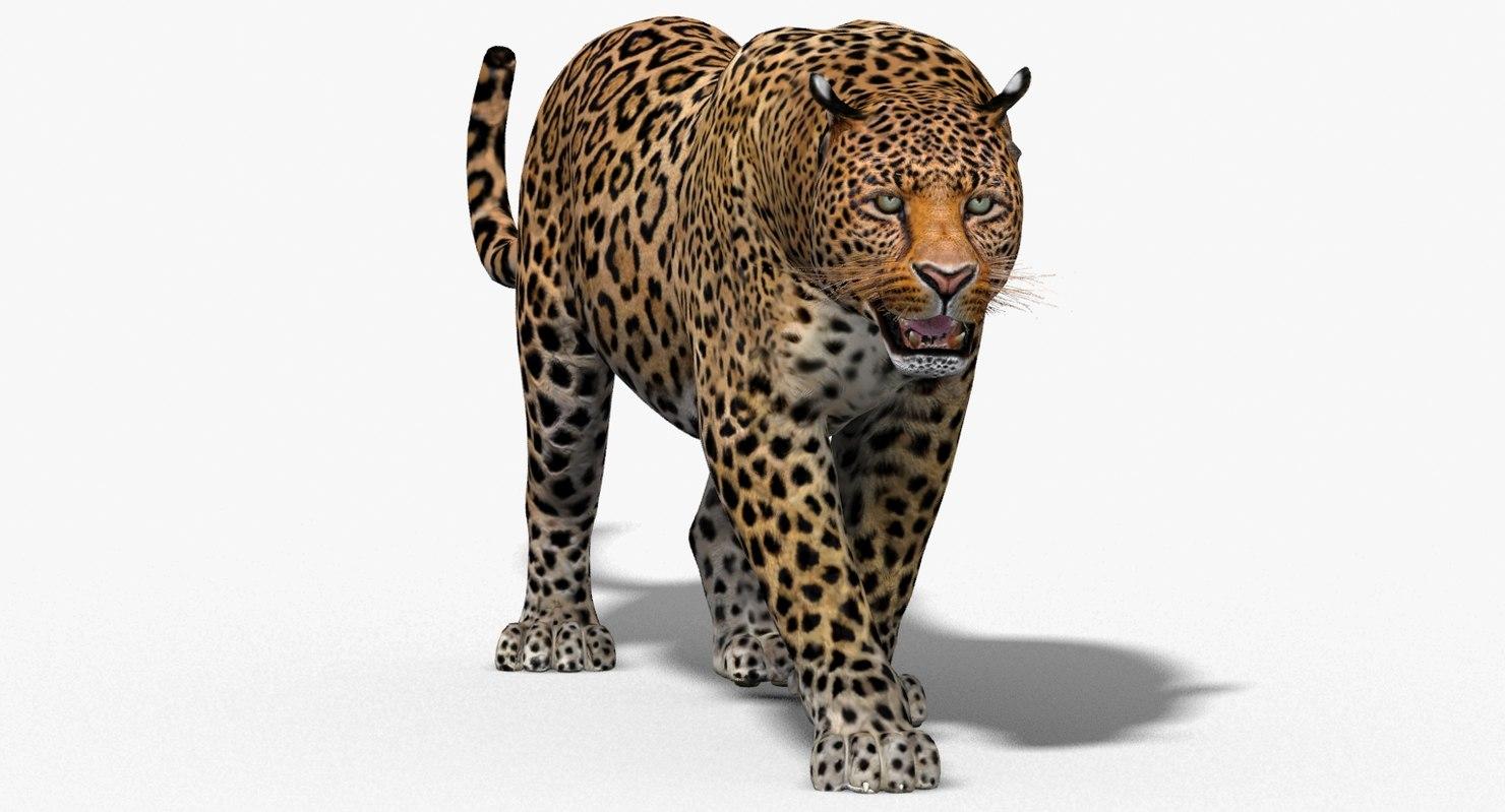 3d leopard cat animation model