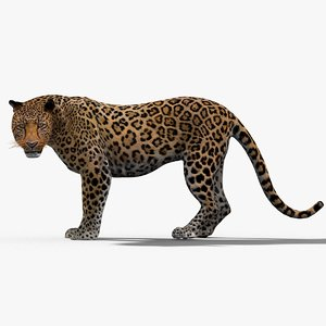 leopard rigged cat max