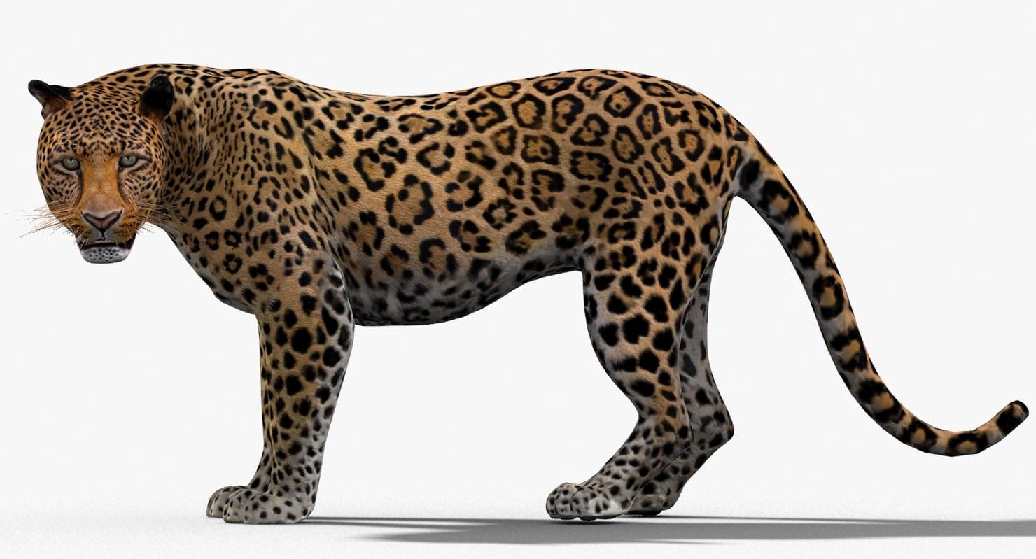 leopard rigged cat max