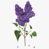 c4d syringa lilac 2