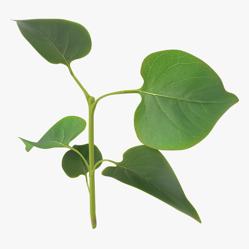 branch leaves 2 3d c4d