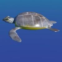 turtle 3d x