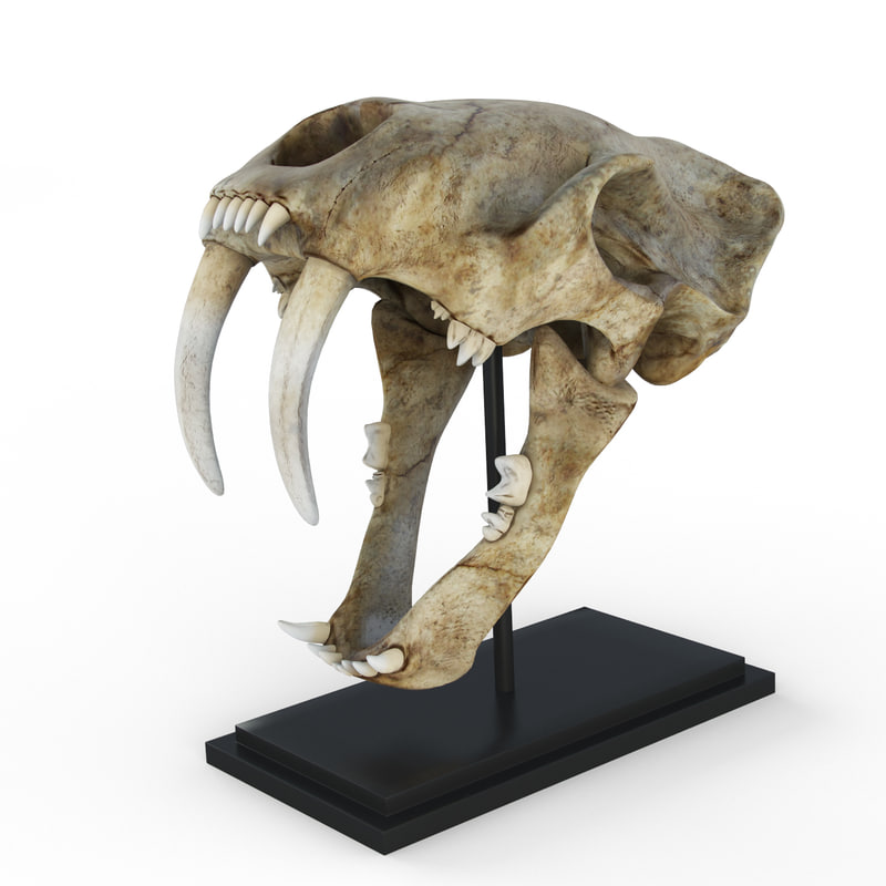 3d saber tooth tiger skull
