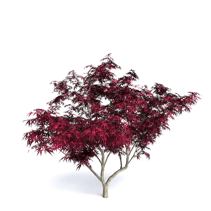 3ds red japanese maple