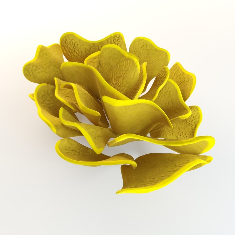 3d model yellow coral