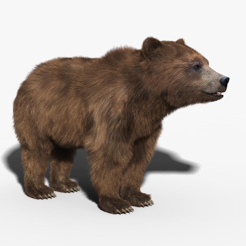 3d brown bear fur