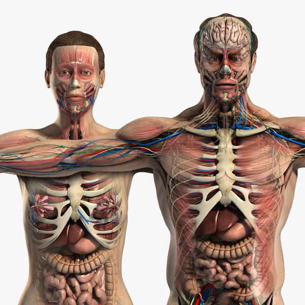 male female anatomy body 3d max