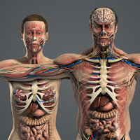 male female anatomy body 3d max