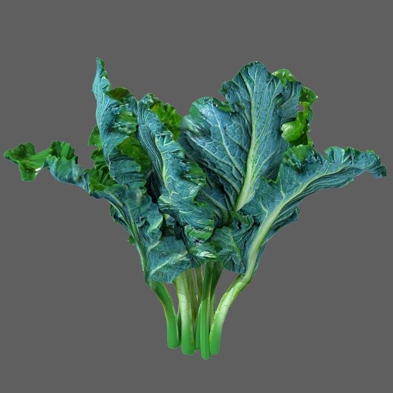 3d kale borecole vegetable