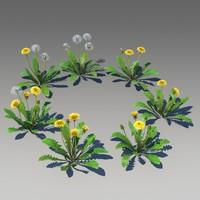 3d dandelion