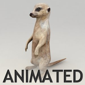 max meerkat