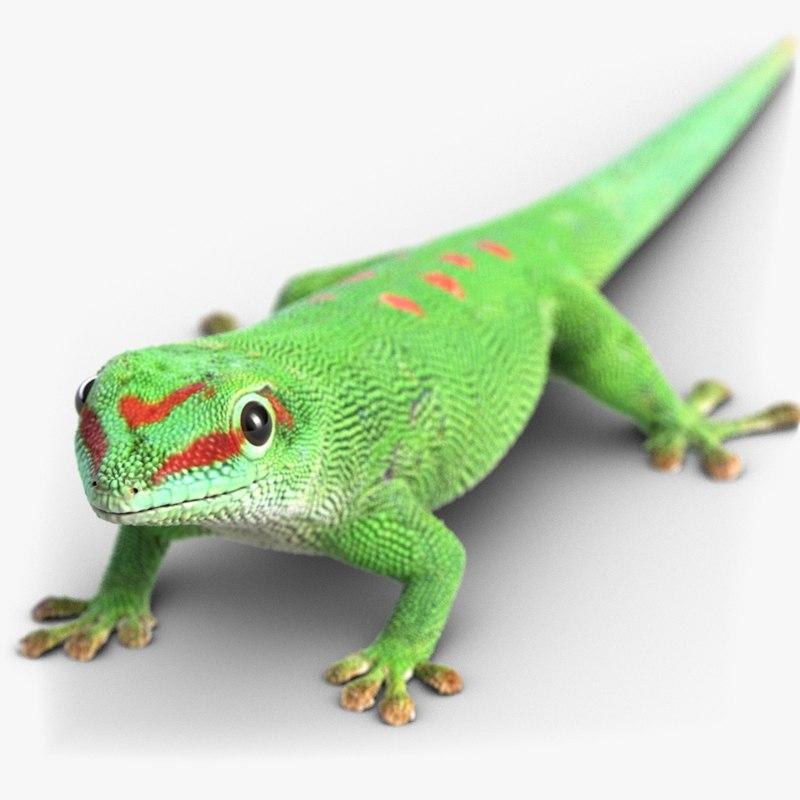 gecko lizard 3d model