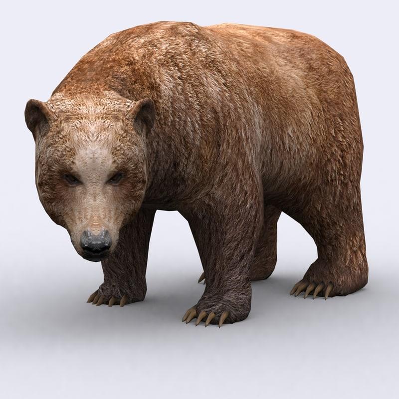- wild animal bear 3ds