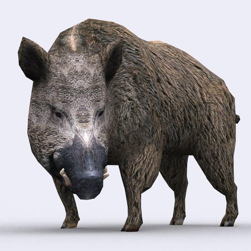 Boar Animations Wild 3d Model