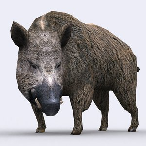 - boar animations wild 3d model