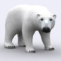 3DRT - Wild Animals - Polar Bear