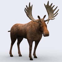3DRT - WIld Animals - Moose