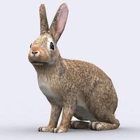 3d model wild animal - hare