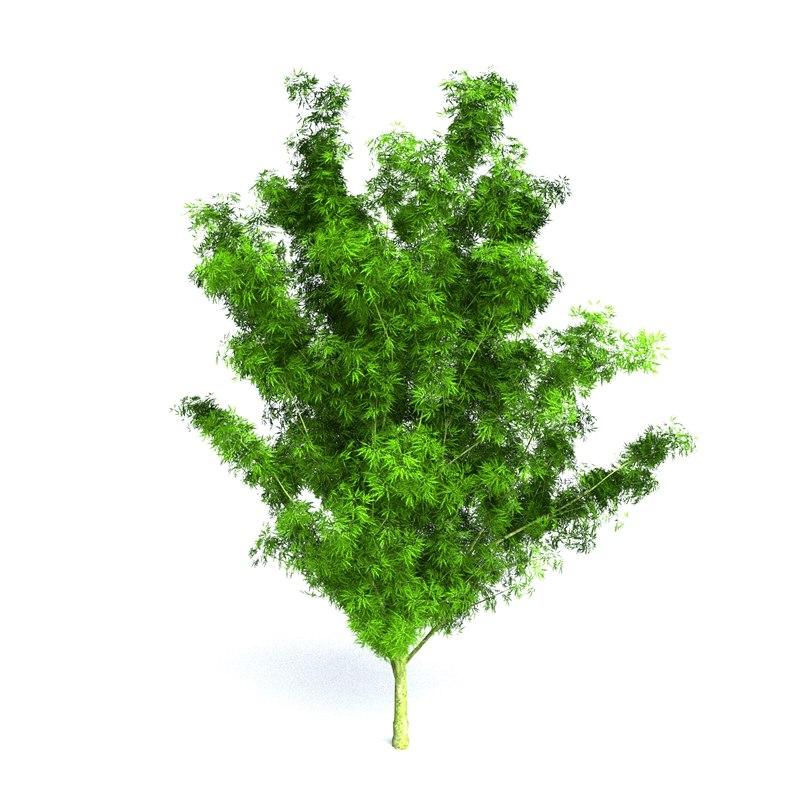 3d model green japanese maple