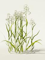 3d oats planting