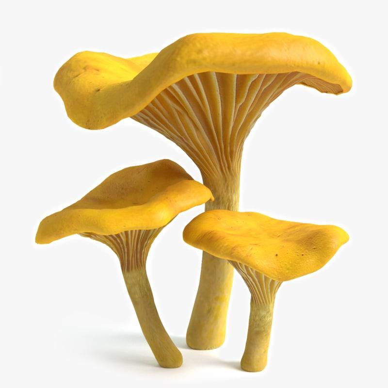 chanterelle mushrooms 3d model