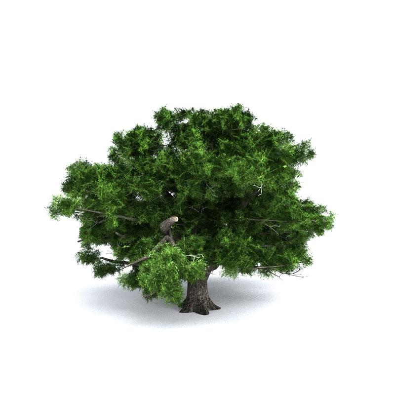 3d model giant green oak
